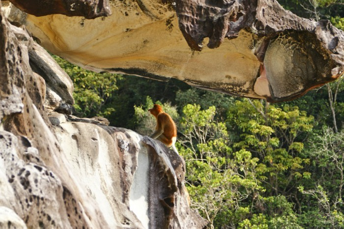 Borneo Family Holiday & Expedition